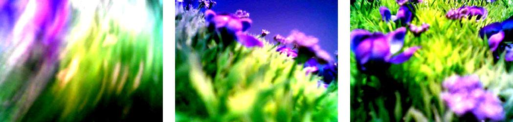 Freie Arbeiten Fotografie Paarzelle
